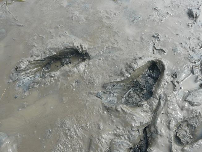 球磨川の干潟一面覆う泥: 荒瀬ダムと川辺川ダムの現場から